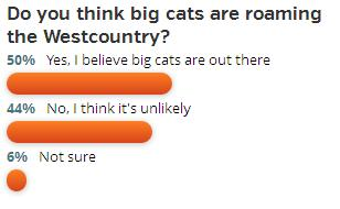 poll - big cats - western morning news