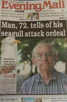 seagullattack